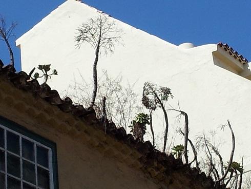 Veroles en los tejados