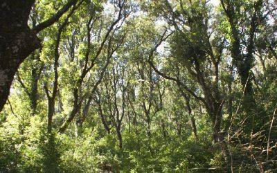 El bosque del aprendizaje-servicio