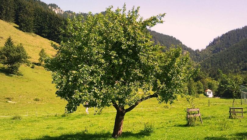 Ellos seguirán plantando sus manzanos